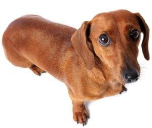 Dog Facial Expressions Explained