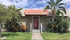 Greyhound Pets of America