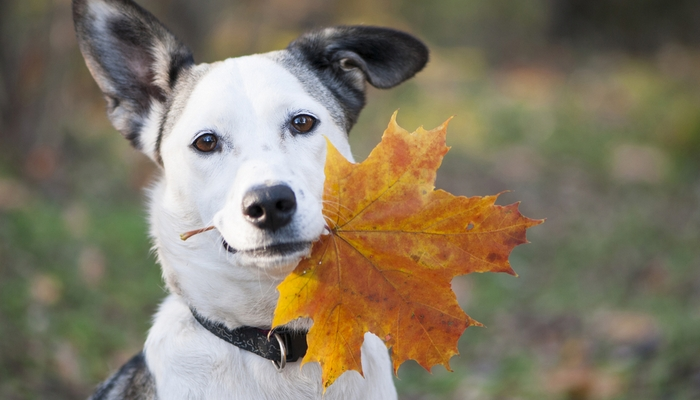 Keep Your Dog Healthy in the Fall