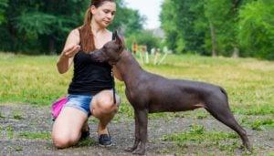Understanding Dog Behavior During Training