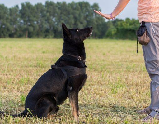 Most Effective Dog Training Methods