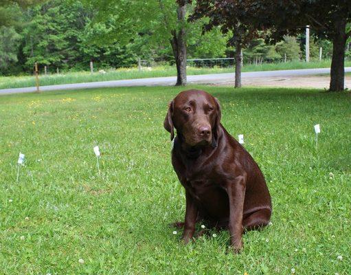 PetSafe Basic In-Ground Fence