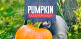 Pumpkin for Dogs 101
