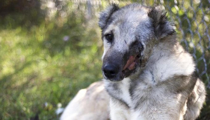 Iranian Dog Flown to U.S. for Treatment for Cruel Injury