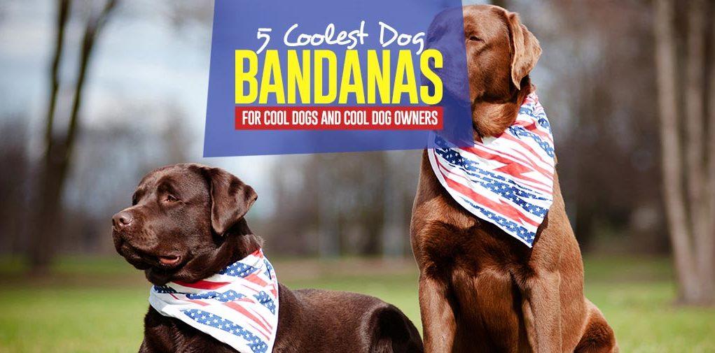 The 5 Best Dog Bandanas