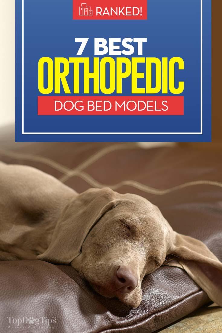 The 7 Best Orthopedic Dog Bed Models
