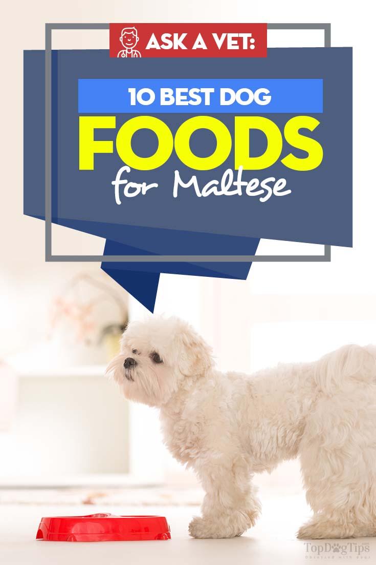Best Dog Food For Maltese 10 Vet Recommended Brands