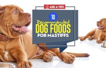The Best Dog Food for Mastiffs