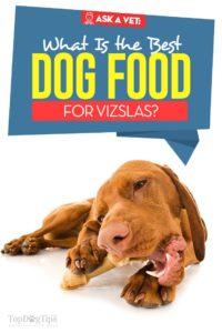 The Best Dog Food for Vizsla