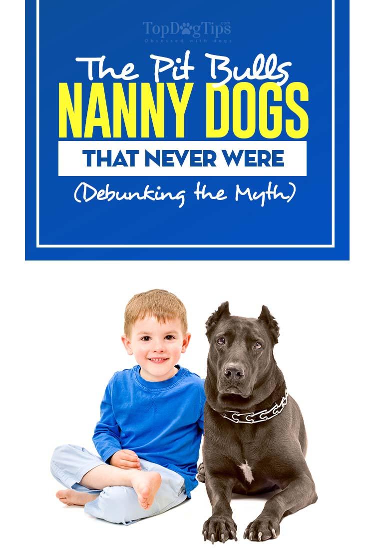 The Pit Bulls Nanny Dogs Myth