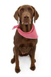 The best dog bandanas