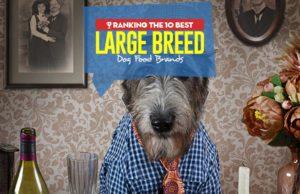 Top 10 Best Large Breed Dog Food Brands