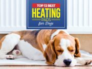 Top 12 Best Heating Pads for Dogs