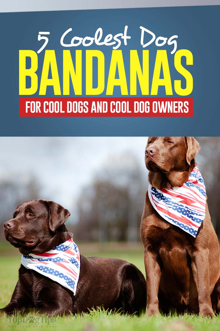 Top 5 Best Dog Bandanas