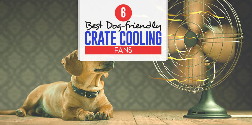 Top 6 Best Dog Crate Cooling Fans