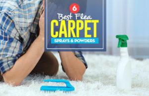Top 6 Best Flea Carpet Sprays & Powders