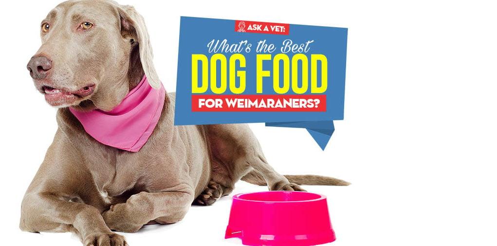 Best Dog Food For Weimaraner 9 Vet Recommended Brands