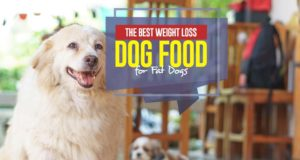 Top Best Weight Loss Dog Food for Fat Dogs
