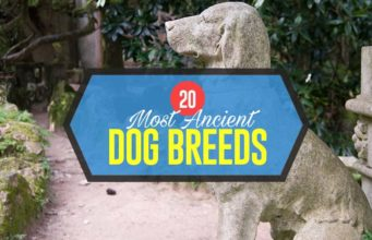 Top Most Ancient Dog Breeds