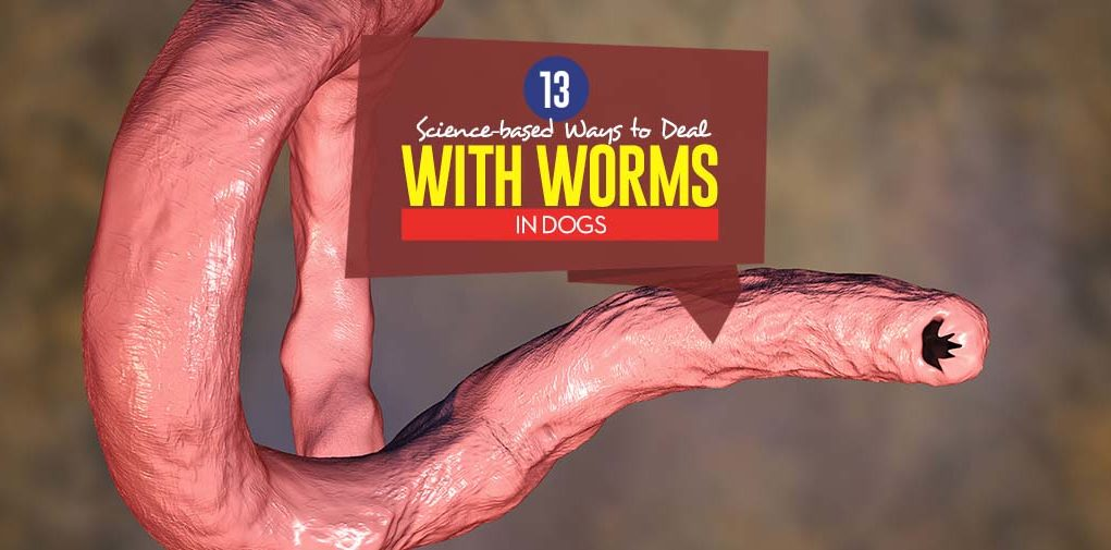 Top Science-based Ways to Deal With Worms in Dogs