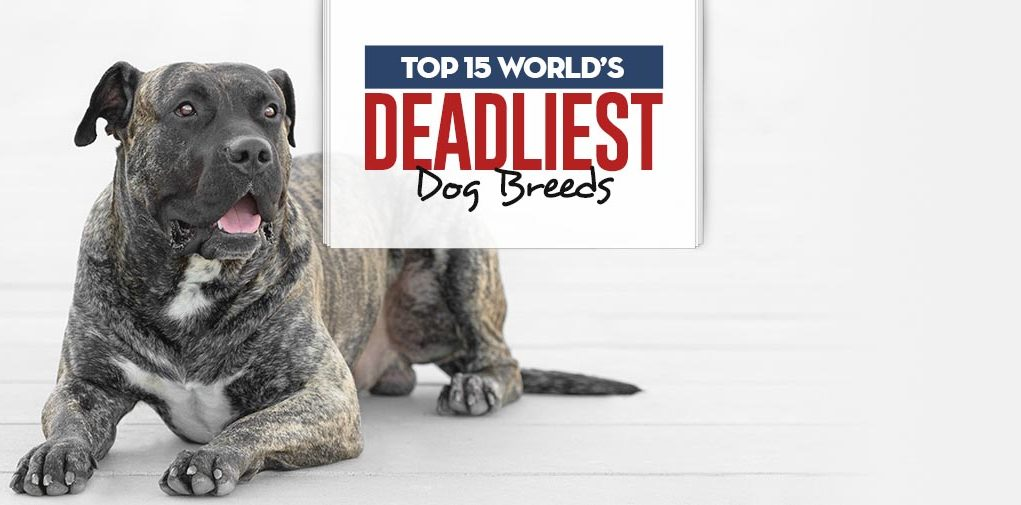 Top World's Deadliest Dog Breeds