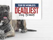 Top World's Deadliest Dog Breeds