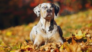Types of Hunting Dogs
