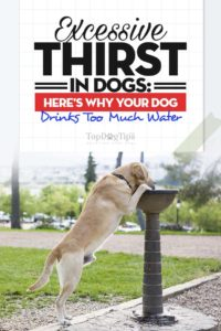 Do Larger Breeds Of Dogs Drink More Water
