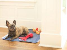 best dog heating pad