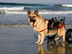 Top best dog wheelchair options