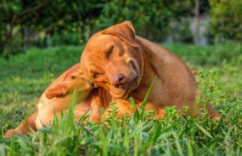 best flea pills for dogs