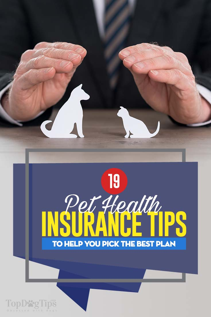 Infographic: 19 Pet Health Insurance Tips To Pick The Best