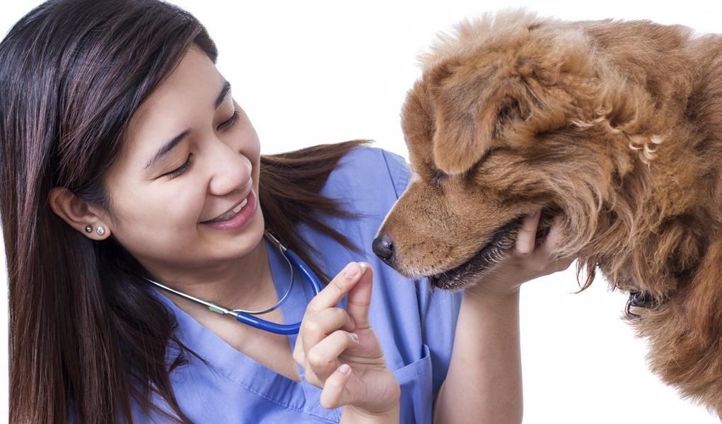 Cheap Pet Meds For Dogs