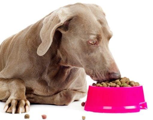 Best Dog Food for Weimaraner
