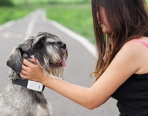 Best Dog Tracker Comparison