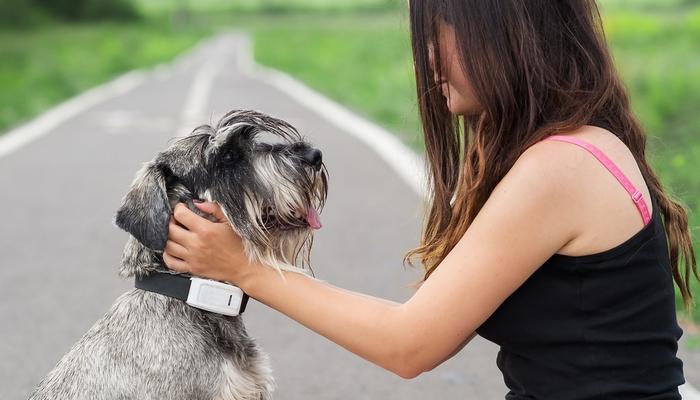 Best Dog Tracker Comparison Tagg Vs Fitbark Vs Whistle