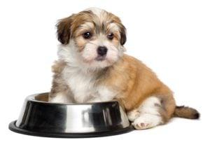 Best Grain Free Puppy Food
