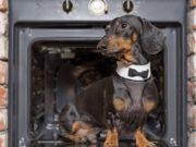 Best Thanksgiving Dog Costumes