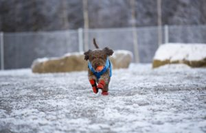 Best Winter Dog Clothes