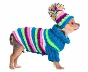 Best Winter Dog Clothes