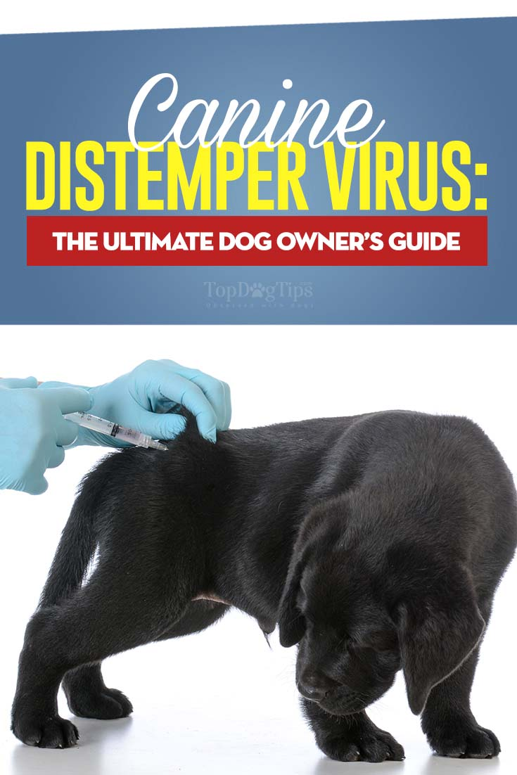 Canine Distemper Virus - The Ultimate Dog Owner's Guide