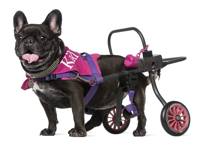 DIY Dog Wheelchair: How to Make a Wheelchair for Dogs By