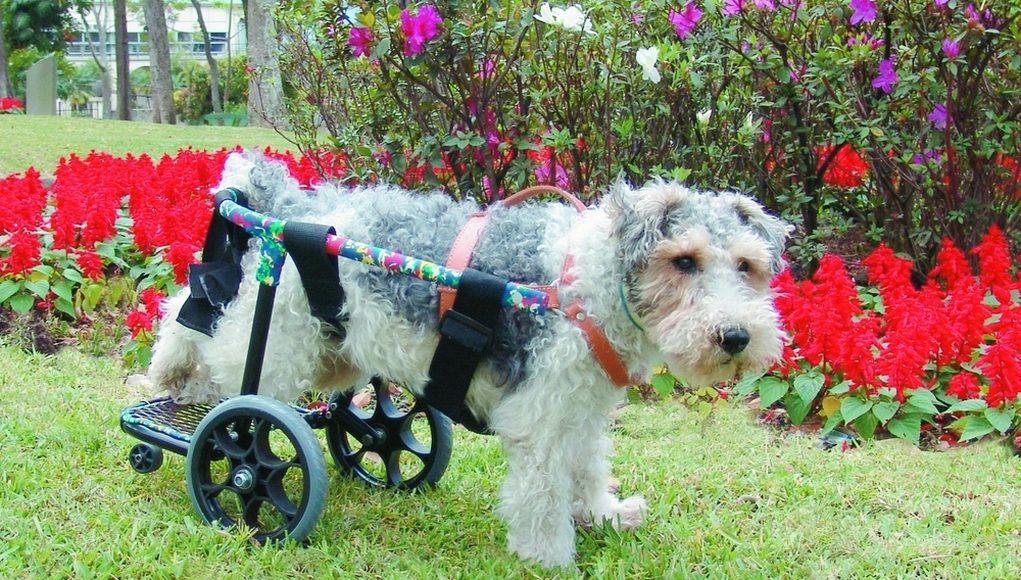 DIY dog wheelchair