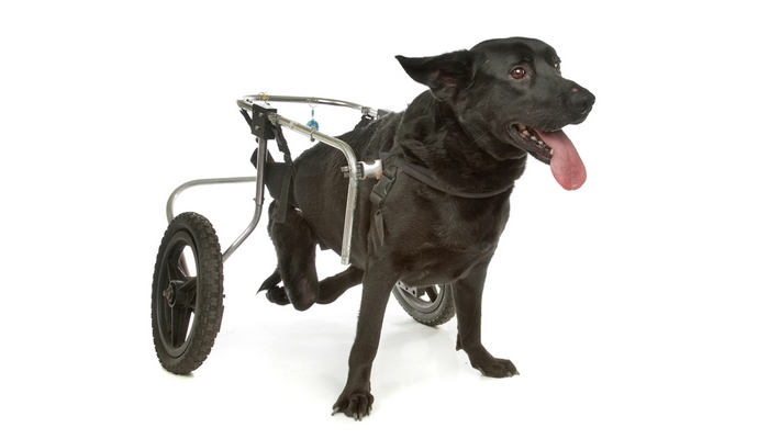 Diy Dog Wheelchair How To Make A Wheelchair For Dogs By