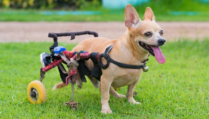 Diy Dog Wheelchair How To Make A Wheelchair For Dogs By Yourself