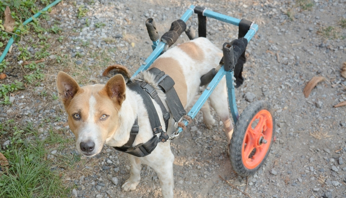Other dog supplies for disabled dogs