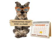 Dog Thanksgiving Safety Tips for Pet Owners