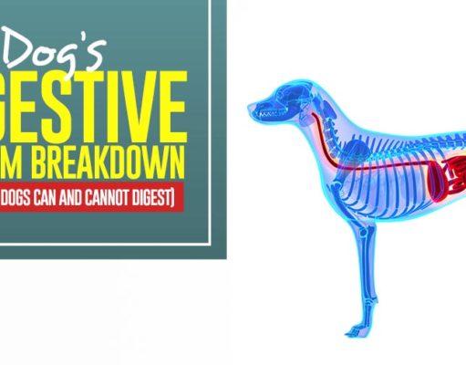 Dog's Digestive System Breakdown