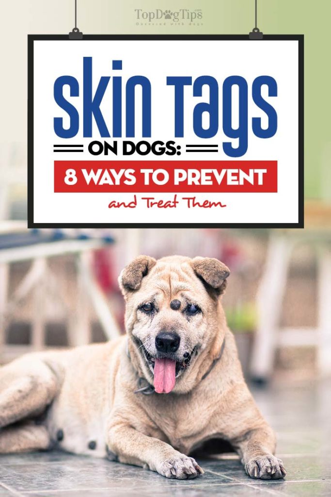 Guide on Skin Tags on Dogs
