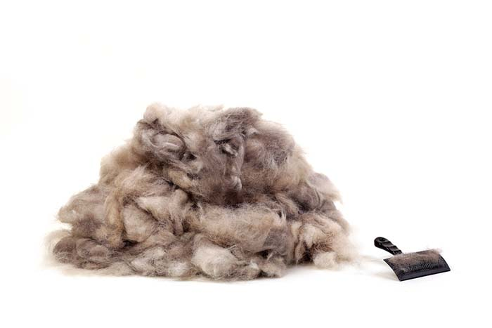 How to reduce dog shedding winter